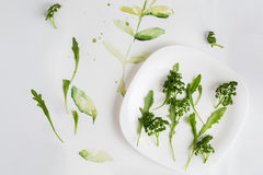 Top view of a fresh parsley and arugula. On a plate isolated white background with drawn sprout and leaves Royalty Free Stock Images
