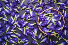 Top view fresh purple Butterfly pea flower on black stone board