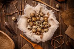 Top view of fresh quail eggs Stock Image