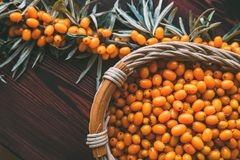 Top view of fresh raw Sea Buckthorn berries in a wooden basket and branch with leaves on wooden table. Selective focus, toned Stock Images