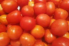 Top view of fresh red organic tomatoes Often have traces of insects and sometimes unattractive skin stock photos