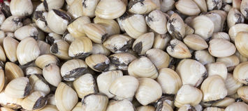 Top view of fresh shellfish cockles. Background in market Royalty Free Stock Photos