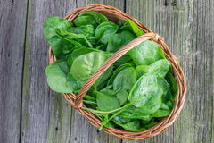Top View on a Fresh Spinach leaves in a wicker basket. On Old Wooden Table Royalty Free Stock Photos