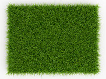 Top view of Fresh Spring Green Grass - natural background. 3d render Royalty Free Stock Photos