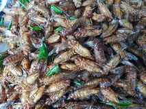 Top view of fried cicada for snack. stock image