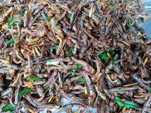 Top view of fried grasshoppers for snack on sale. stock images