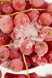 Top view of frozen currants with stems Royalty Free Stock Photography