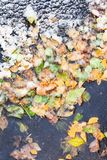 Top view of frozen puddle with fallen leaves royalty free stock images