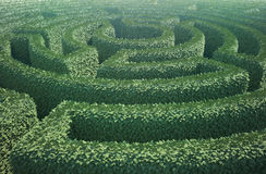 Top view of a garden maze. A top view of a garden maze Royalty Free Stock Photography