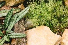 Top view garden Stock Images