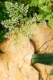 Top view garden Royalty Free Stock Photography