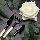 Rose leaves and garden tools frame, spring gardening concept. Top view gardening tools , whiterose, green rose leaves Stock Photo
