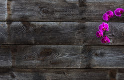 Top view of genuine old wood wallpaper with pink orchids Royalty Free Stock Photography