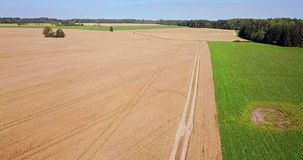 Top view of grain fields. In summer day stock video footage