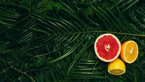 Top view of grapefruit lemon and orange halves on palm leaves. With copy space royalty free stock images