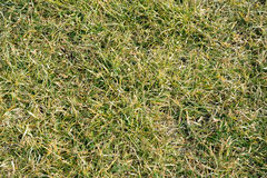 Top view of a grass field. Pattern background. Top view of a grass, texture, background pattern image Stock Photo