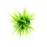 Top view of grass Stock Images