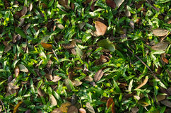 Top view of grass and leaves Royalty Free Stock Photos