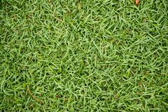 Top view of green grass background royalty free stock photos
