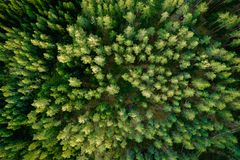 Top view of the green forest trees. Aerial photo stock images