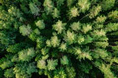 Top view of the green forest trees. Aerial photo royalty free stock photo