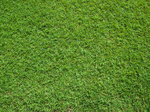 Top View of Green Grass Royalty Free Stock Photography