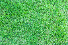 Top view of green grass Stock Photography