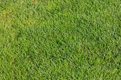 Top view of green grass for background. stock image