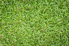 Top view of green grass pattern Stock Photography