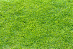 Top View of Green Grass Texture Royalty Free Stock Image