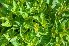 Top view green leaves background royalty free stock images