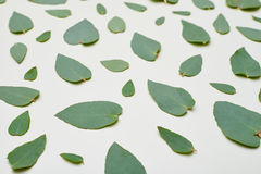 Top view of a green leaves pattern Stock Photo