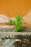 Top view of green plant near brown river. And stone shore Royalty Free Stock Photography
