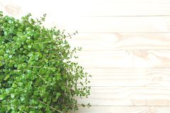 Top view of green plant on wooden table and copy space for inser Royalty Free Stock Photography