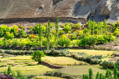 Top view of green valley field with barren mountains around, agricultural land, Leh, Ladakh, India Stock Image