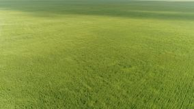 Top view of green wheat field during a strong wind. Top view of a green wheat field during a strong wind stock footage