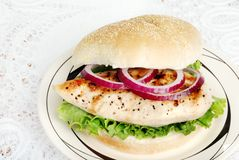 Top view grilled chicken sandwich Stock Images