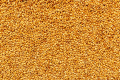Top view of harvested barley wheat cereal grains. To be used as agricultural or food production background Royalty Free Stock Photography