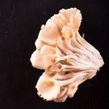 Top view on healthy oyster mushroom on slate stone Royalty Free Stock Images
