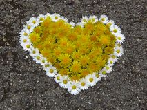 Top view. Heart shaped daisy and dandelion flowers bouquet on the road. Taraxacum. Bellis perennis. Spring summer white yellow flower. Suitable for greeting royalty free stock image