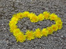 Top view. Heart shaped dandelion flowers bouquet on the road. Taraxacum. Spring summer yellow flower. Suitable for greeting card, St Valentines day, wedding stock photo