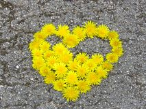 Top view. Heart shaped dandelion flowers bouquet on the road. Taraxacum. Spring summer yellow flower. Suitable for greeting card, St Valentines day, wedding stock image