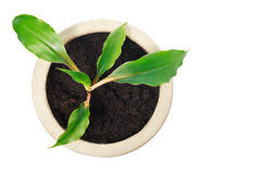 Top view of houseplant in ceramic pot Stock Image