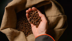 TOP VIEW: Human takes a coffee beans from a sac by hand and look it Royalty Free Stock Photo