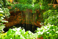 Top view of Ik-Kil cenote at Chichen Itza, Mexico Royalty Free Stock Image