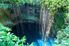 Top view of Ik-Kil Cenote, near Chichen Itza, Mexico. Lovely cenote with transparent waters and hanging roots Royalty Free Stock Photography