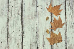 Top view image of autumn leaves wooden textured background. copy space Royalty Free Stock Photography