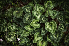top view image of green leaves pattern Stock Images