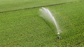 Top view: Irrigation sprinklers in the field aerial shot stock video
