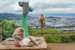 Arashiyama mountain with monkeys and binoculars. Top view of Kyoto from Arashiyama mountain with monkeys and binocular, cloudy day, focus on foreground monkeys Royalty Free Stock Photography